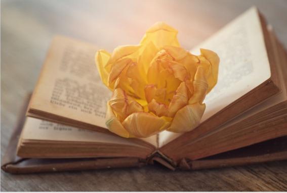 libro-flor